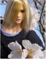 Sakura1p